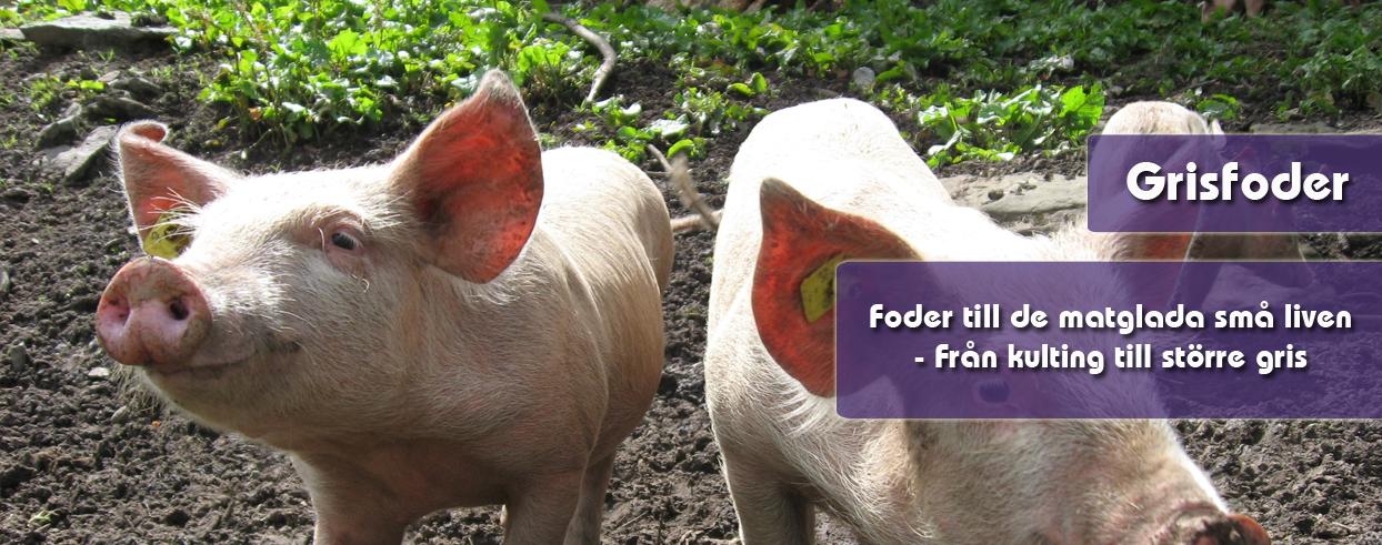 grisfoder