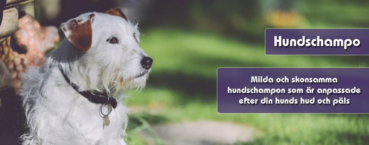 hundschampo