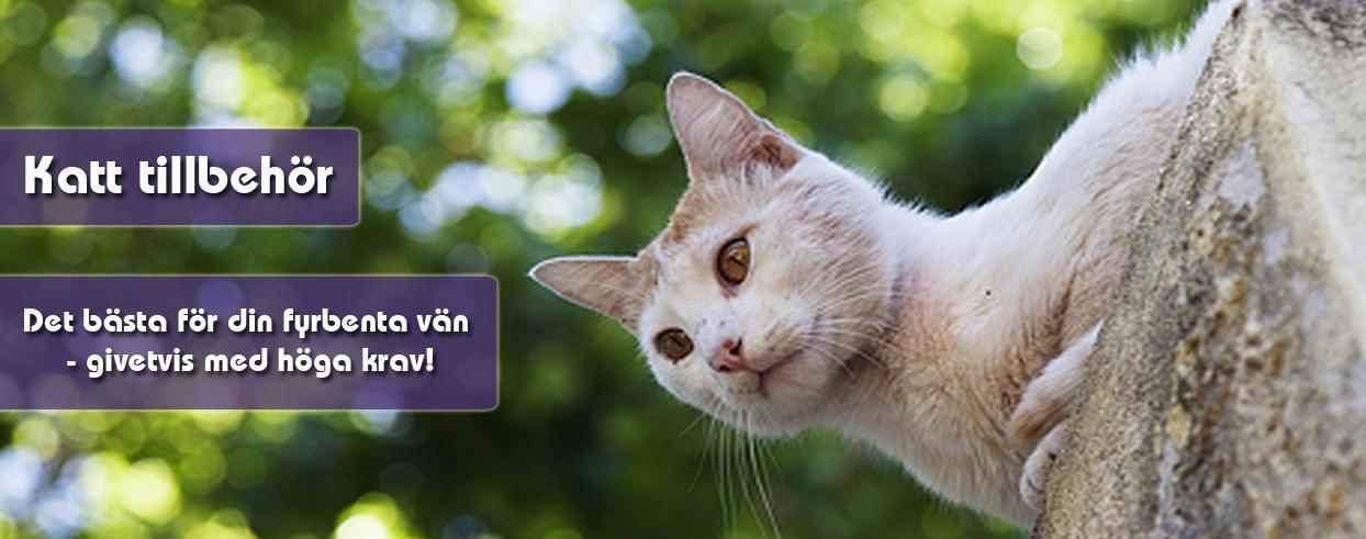 katt-tillbehor
