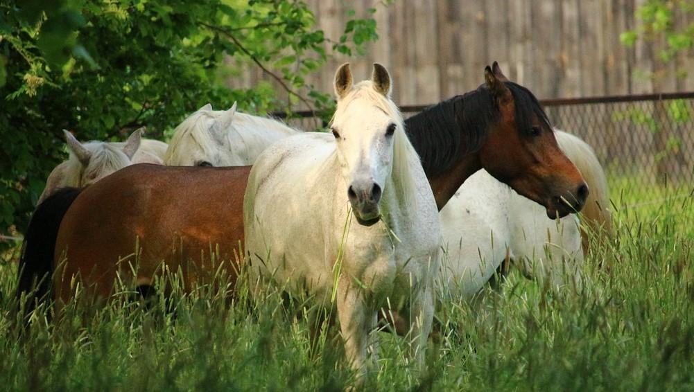 Spillers hästfoder